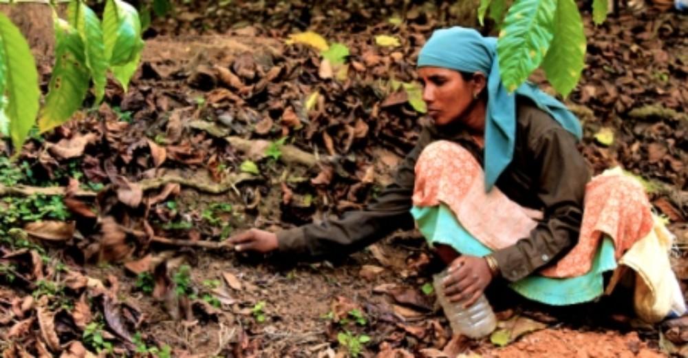 A women worker preparing the soil before spraying fertiliserJPG