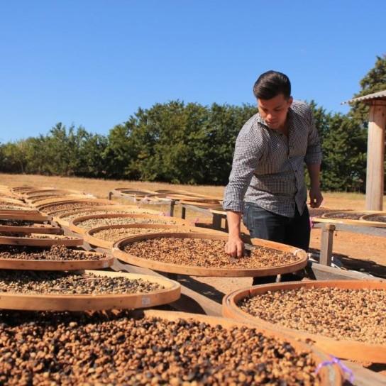 Daterra experimental coffee trays