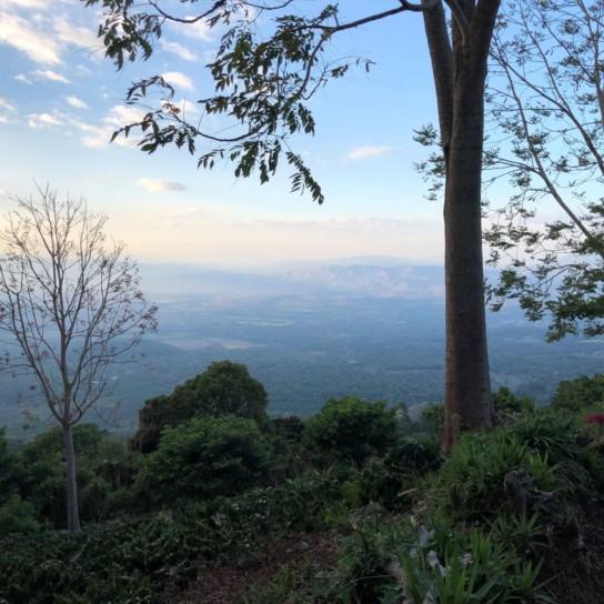 El Salvador coffee farm Finca El Ingenio