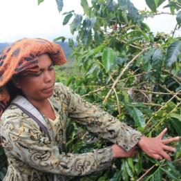 Background image for PT. Sumatera Jaya Kopi