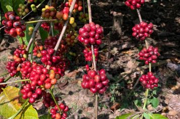 Image for Is It Time To Rethink Robusta?