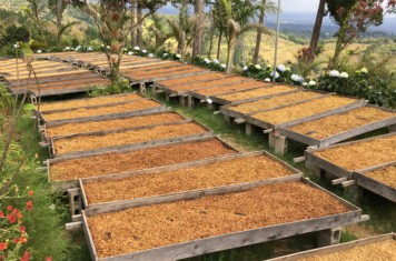 Image for Coffee Market Report February 2017