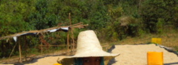 Background image for Kenya origin