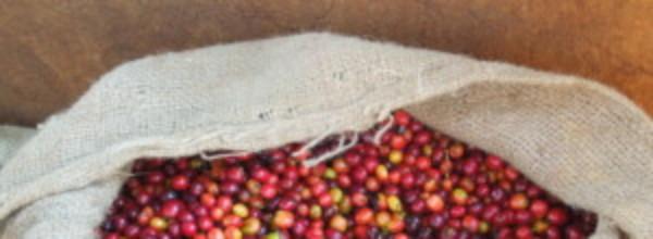 Background image for Burundi origin