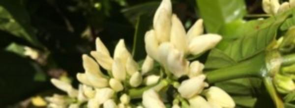 Background image for Papua New Guinea origin
