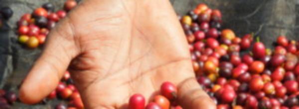 Background image for Uganda origin