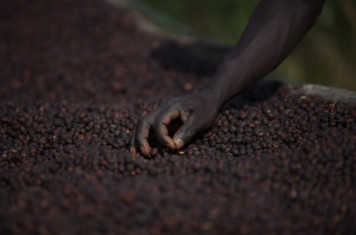 Image for Coffee Market Report June 2017