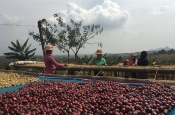 Image for Coffee Market Report February 2018