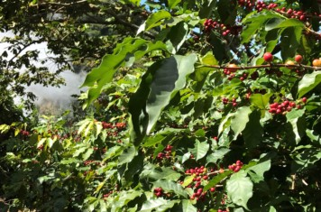 Image for Coffee Market Report April 2018