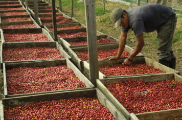 Image for Coffee Market Report May 2018