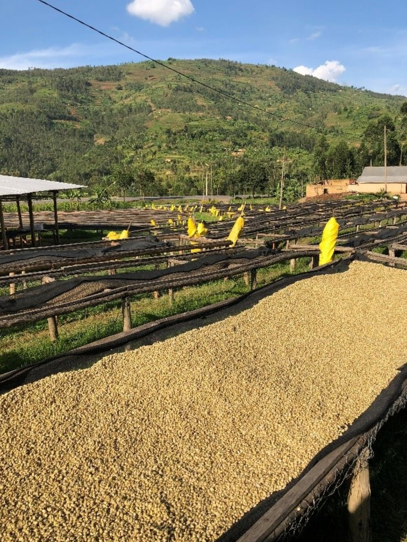 Drying beds Rwanda Kinini