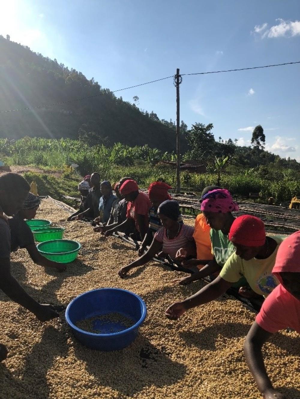Kinini Rwanda sorting beans