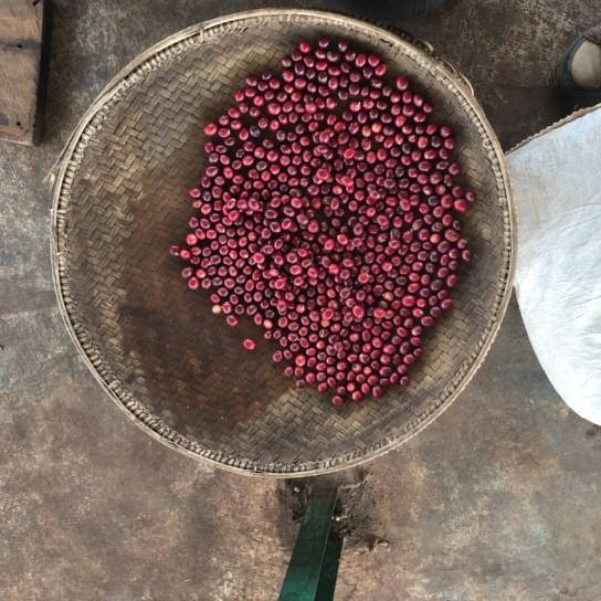 Myanmar Shwe Ywar Ngan red cherry
