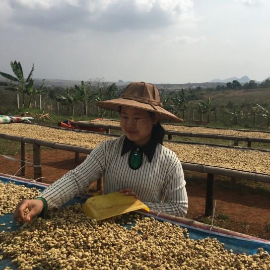 Myanmar Shwe Ywar Ngan washed coffee beans