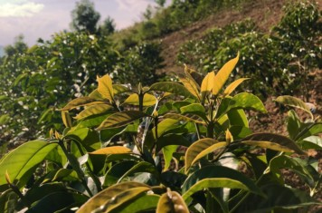 Image for Coffee Market Report June 2018