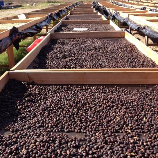 Honduras Liquidambar coffee