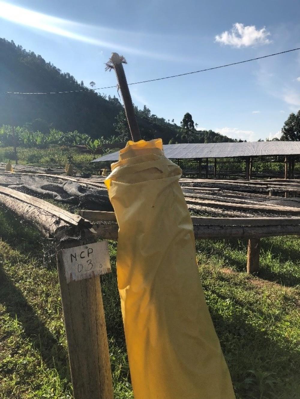 Taurpaulin Rwanda Kinini