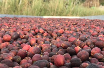 Image for Coffee Market Report October 2018