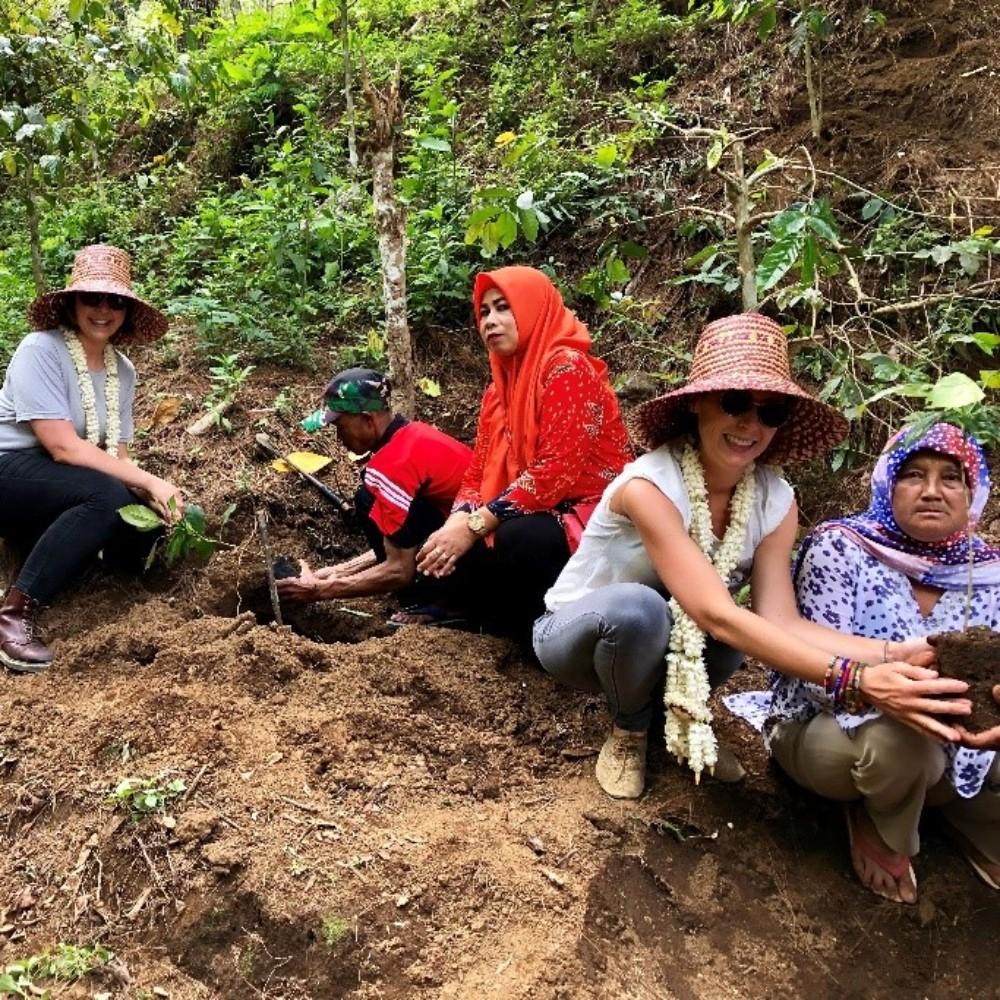 Kayumas, coffee farm