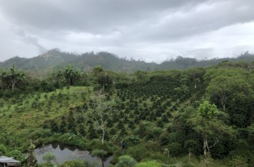 Image for Coffee Market Report January 2019