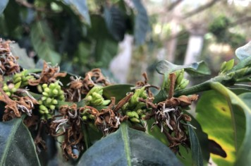 Image for Coffee Market Report March 2019