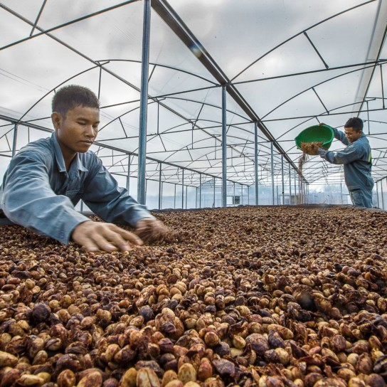 Pô Kô Farms Vietnam