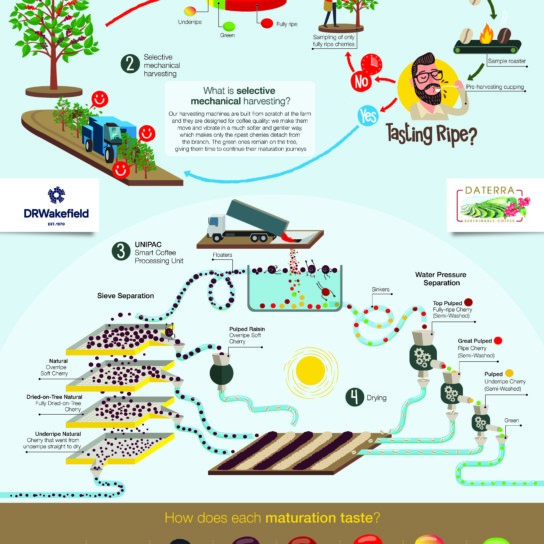 Daterra Processing and sorting Infographic