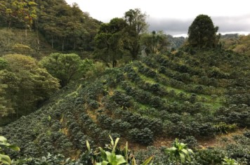 Image for Coffee Market Report August 2019