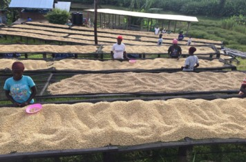 Image for Coffee Market Report September 2019
