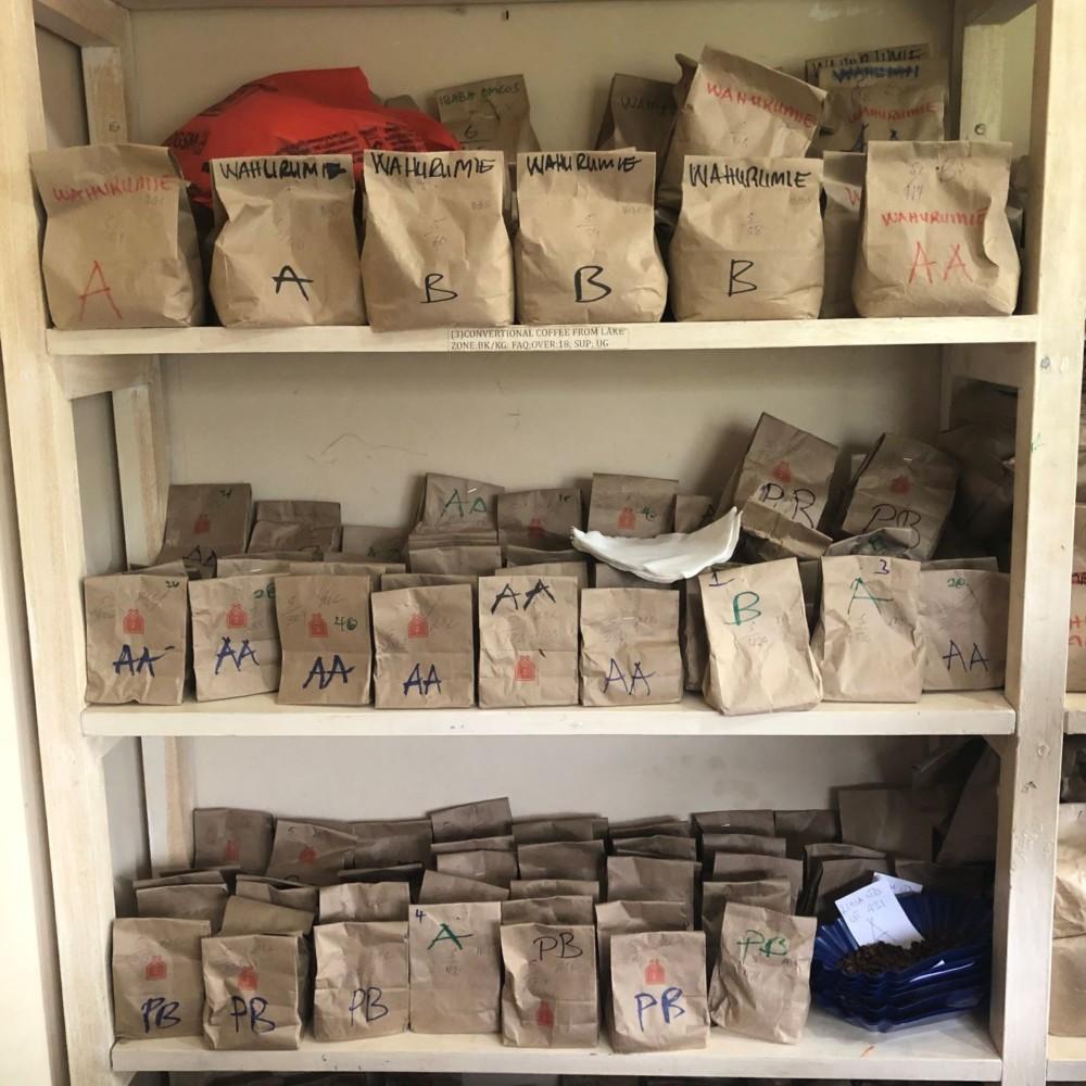 Coffee smaples Tanzania