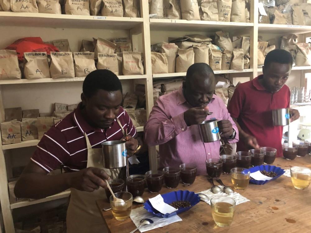 Mambo cupping team, Tanzania coffee