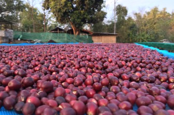Image for Coffee Market Report December 2019