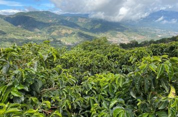 Image for Coffee Market Report August 2020