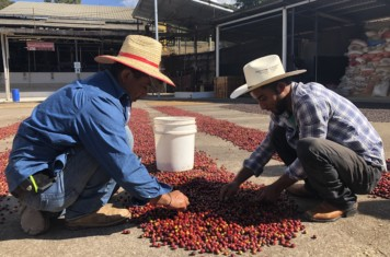 Image for Coffee Market Report February 2020