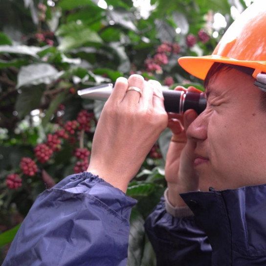 A man looks through his brixometer to measure the sugar levels of the cherries before harvesting